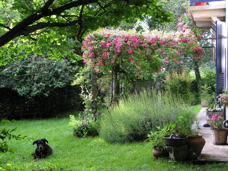 Giardino privato, L. Pirovano. Laveno