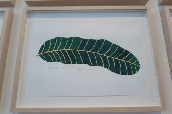 La mostra 'Nous les arbres' alla Fondation Cartier a Parigi