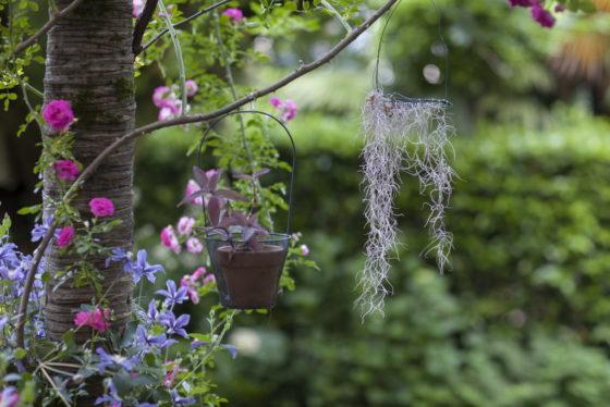 Auguri di un felice 2020 a tutti gli appassionati del mondo dei giardini