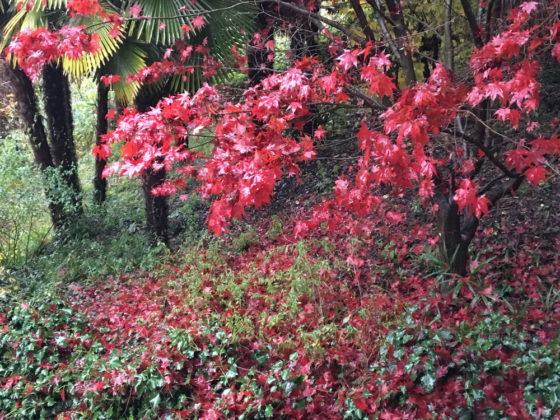 Il mio giardino a Laveno alla fine dell'autunno