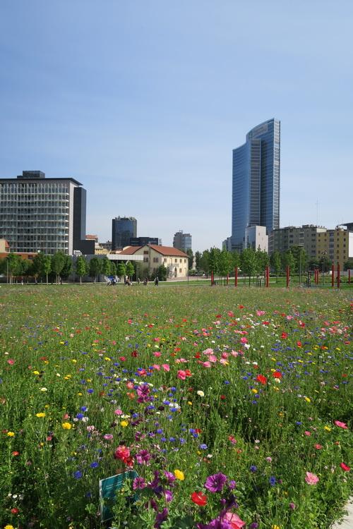 Parchi milanesi: prati fioriti alla BAM e Parco di Cascina Merlata