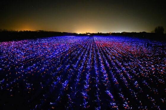 GROW: una installazione olandese a led contro i pesticidi