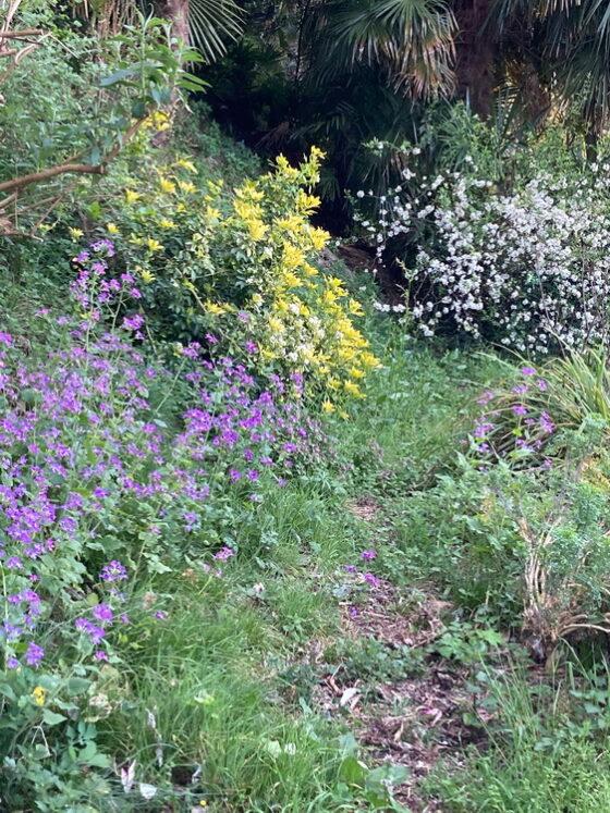 Il mio giardino di Laveno a inizio primavera